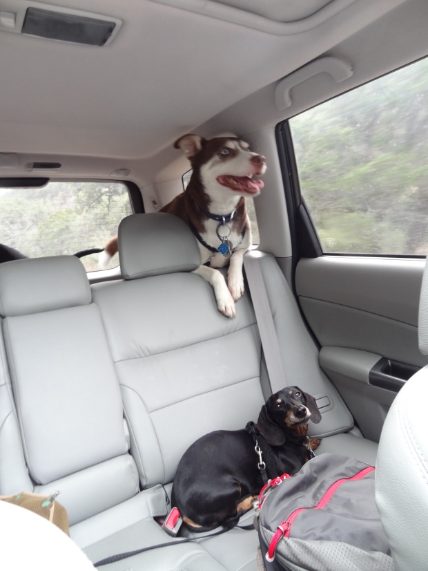 Echo likes car rides slightly more than Meeka does.