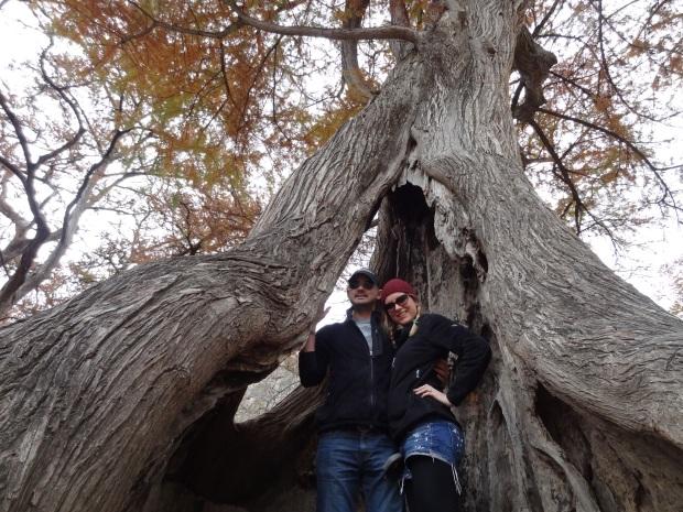 See amazing giant trees!